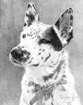 Paintings by Lori Garfield : Echo, portrait of a pet dog in graphite. Original Drawing by artist Lori Garfield, Medford Oregon