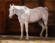 Paintings by Lori Garfield : Into the Morning Light, full body painting of a white horse. Original Oil Painting by artist Lori Garfield, Medford Oregon