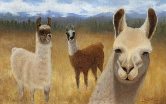 Paintings by Lori Garfield : Smiling Llamas, painting of three llamas. Original Oil Painting by artist Lori Garfield, Medford Oregon
