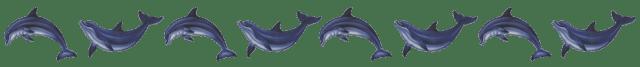 dolphinbanner