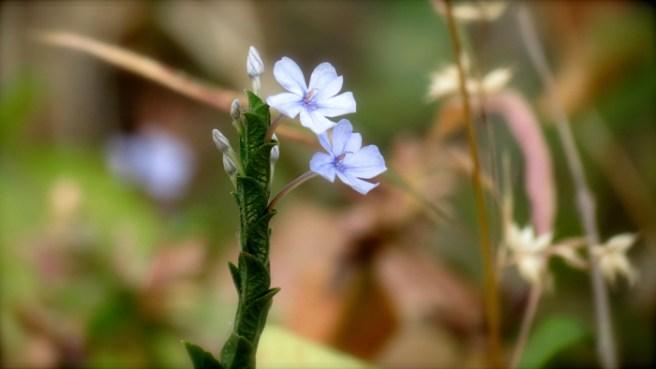 LTP-Spring-flower