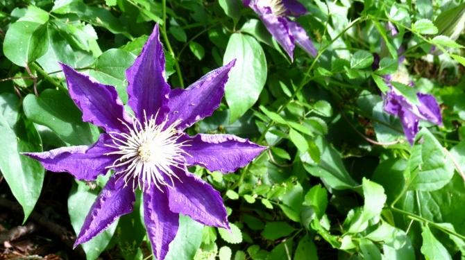 blue-flower-2-670x375