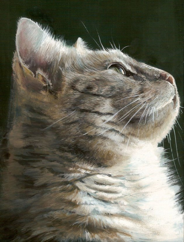 chat captive peinture gouache