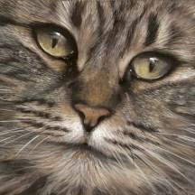 chat-doux-regard