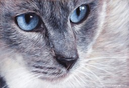 chat-yeux-doux