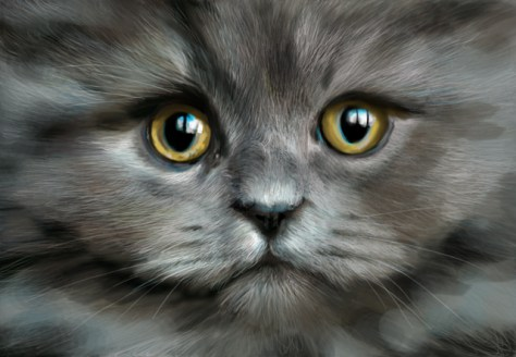 chat peinture tablette