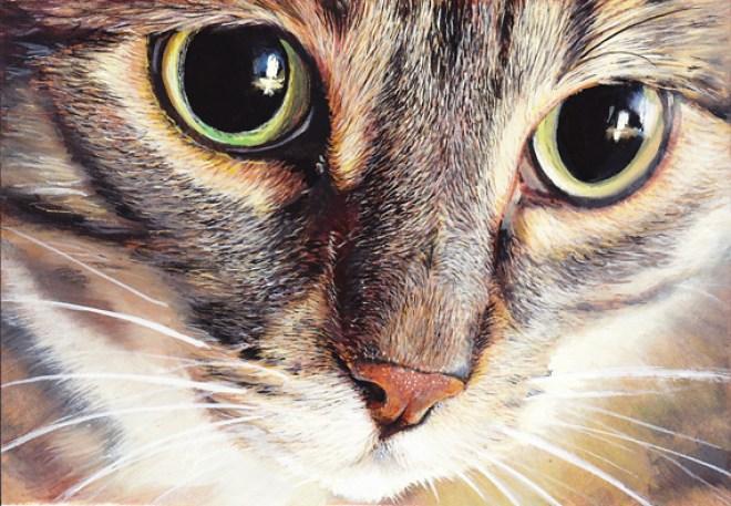 regard de chat peinture gouache