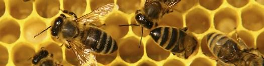 Bee Banner