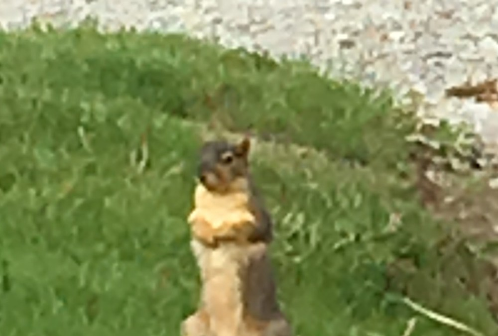 Friends along the way. – Squirrel