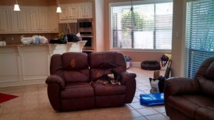 Kuma doesn't want his couch taken, but read how it reappears in Phoenix!