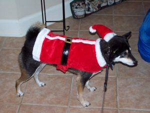 Kuma is showing off his Christmas spirit and wishing you happy holidays!