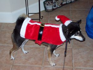 Kuma in his Santa suit
