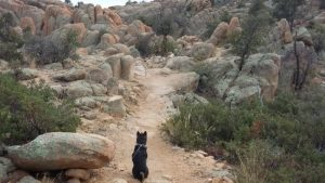 Kuma explores the Constellation...trail that is! Travel to Prescott AZ if only through his blog.
