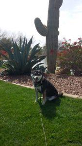 Kuma enjoys the park