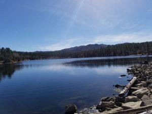 Kuma goes for a winter hike at Lynx Lake