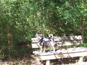 Big Thicket is a nice, easy hike