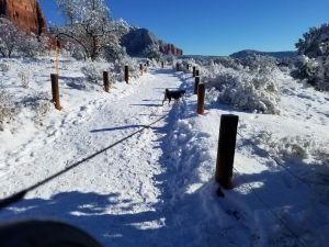 Kuma hikes in snow