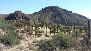 A desert oasis