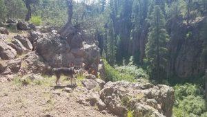 Kuma hikes Sycamore Canyon