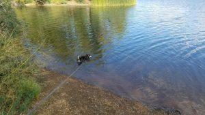 Kuma takes a dip into the lake