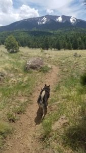 Kuma hiking in Flagstaff