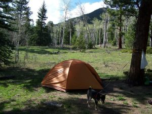 Kuma goes camping