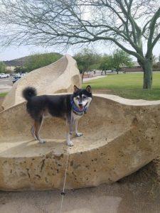 Kuma checks out a new park