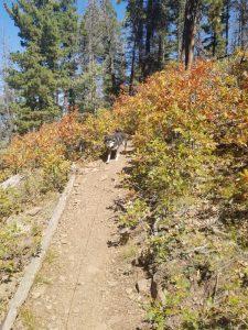 Kuma on Oeste Trail