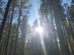 A beautiful day in Flagstaff