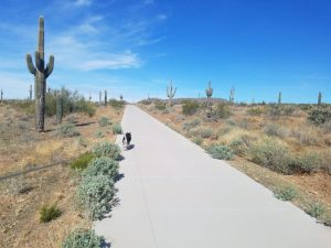Kuma on Dove Valley Path