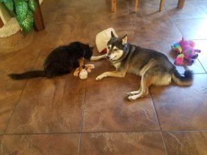 Kuma and Edmond