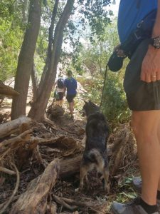 Water Wheel trail is washed out