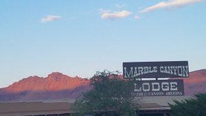 Kuma stays at Marble Canyon
