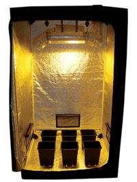 LOr Vert Tente Dark Room Dark Street Chambre De