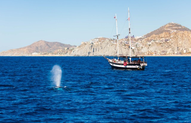 cabo-legend-whale-watching-2