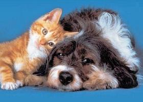 animali_domestici