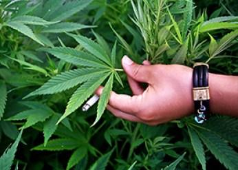 droga-marijuana