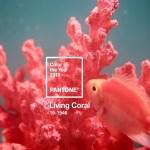 Coral living, il 2019 ama il corallo