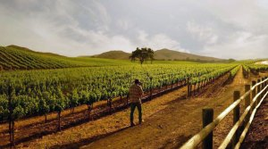 Dragonette Winery in Los Olivos, CA