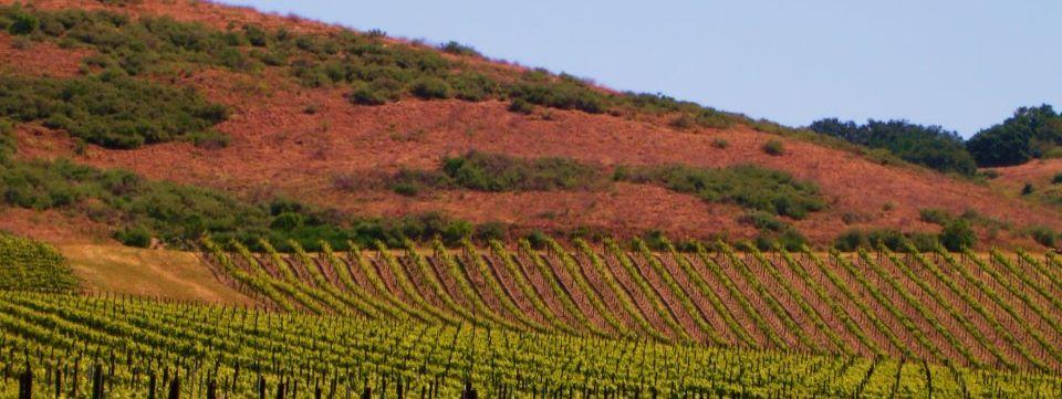 Los Olivos Limousine & Wine Tours