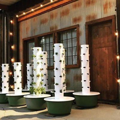 SB Tower Gardens & Seedlings