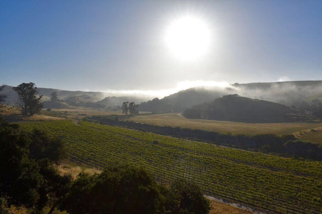 Strange Family Vineyards in Los Olivos, CA