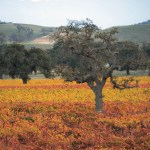 Los Olivos, CA by Westways magazine