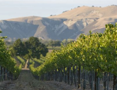 Nielson Wines by Byron