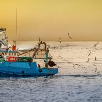 Il progetto sulla tracciabilità del pescato nel Mediterraneo e il confronto con i consumatori in Tunisia