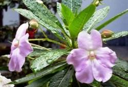 olor de las flores despues de la lluvia