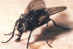 donde se esconden las moscas durante el invierno
