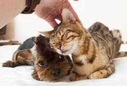 Efectos de una caricia en la cabeza a gatos y perros