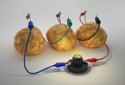 ¿Por qué algunas frutas y verduras conducen la electricidad?