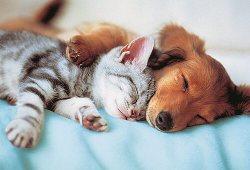 ¿Por qué los animales duermen mucho?
